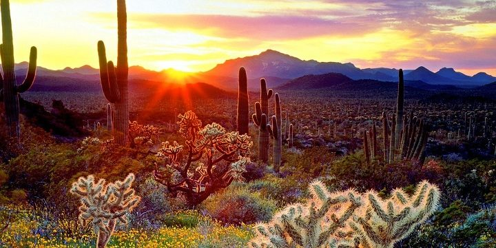 Arizona Sun Rise Cactus Grass Lavender Fields Wallpaper